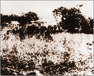 West Exit of Shinjuku Station in around 1887: The plant was located beyond the woods in the left deep position.
